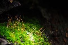 Moss on a Burnt Log