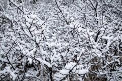 2020-3-14_WagonTrain_Snow-31